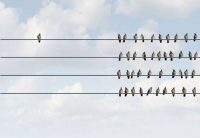 one bird separated from flock sitting on phone lines